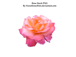 Rose stock PNG by SweetInnerPain