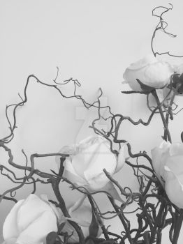 Roses in a corner B and W version roses by OMG-ImSoAwesome