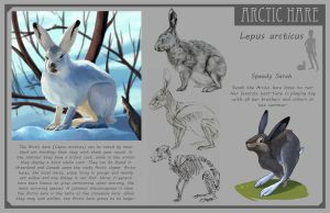 Arctic Hare by Phee