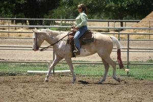 Palomino Paint Mare Western Riding by HorseStockPhotos