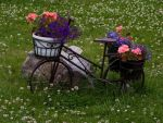 Garden Bicycle by TomiTapio