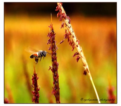 Flying Bee by cyclopsmine