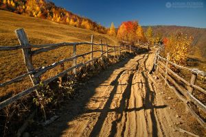 Autumn colors in Apuseni Mountains 23 by adypetrisor