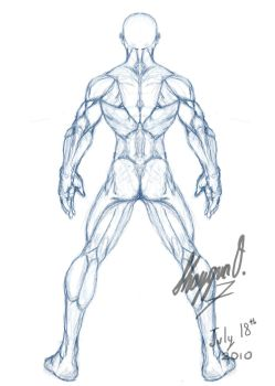 Male Anatomy Template: Back by Shintenzu