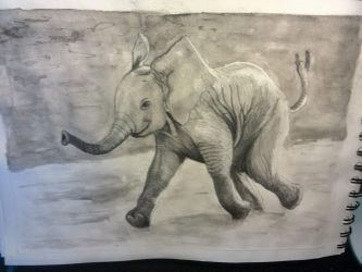 Baby Elephant by Hashsay