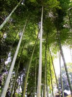Bamboo forest by kitsune89