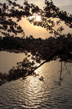 Sunrise on the Tidal Basin by willowswhisp