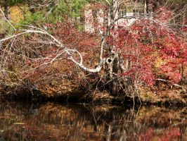 Red tree eyes Fall reflection by astutefish