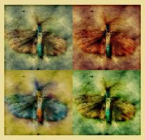insectseries_1 by Grasycho