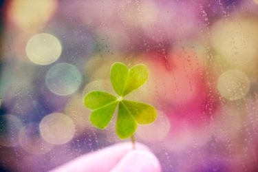 Clover 3 by S-Banh