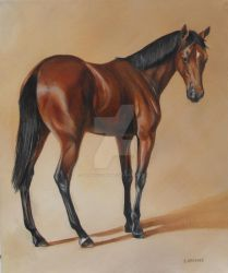 Thoroughbred yearling, Study by Stephanie-Greaves