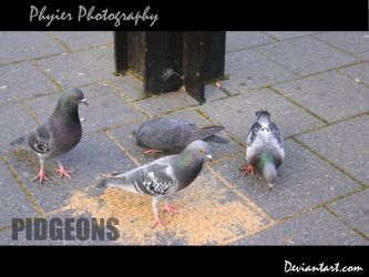 Pidgeons by PuppetReaver