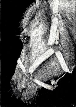My Old Horse... Is Old. by Undeniable-Love