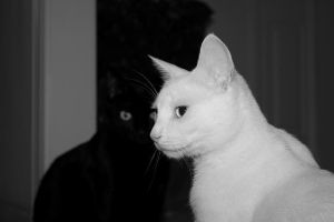 2 cats in black and white 2 by bobbyfufu