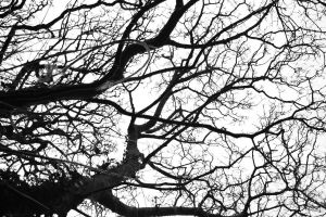 Branches by behindthesofa