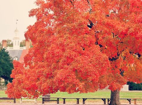 Colonial Autumn by midnight5