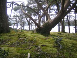 Mossy Area by CelticTouch-Stock