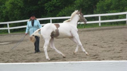 Paint Baby 001 by vorbei-horse-stock