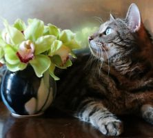 Tabby and an Arrangement of Green Orchid Flowers by Kitteh-Pawz