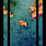 Leaves on the Water by Jack-the-Shinigami