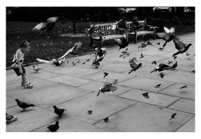 Pigeon evacuation by MyPrivateParty