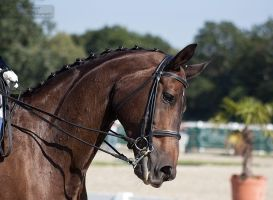 National Dressage and Jumping_59 by CalyHoney