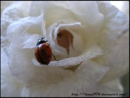 white flower with ladybird by lamu1976