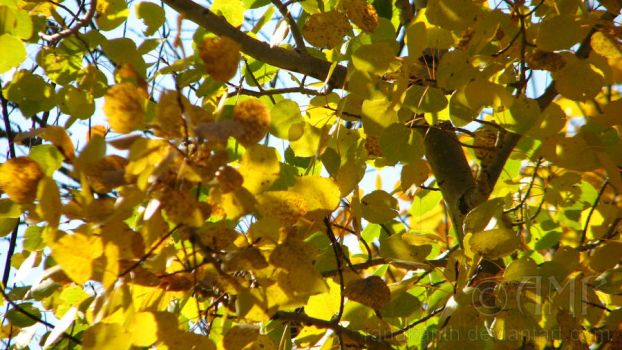 Autumn Leaves 2 by Ranakanth