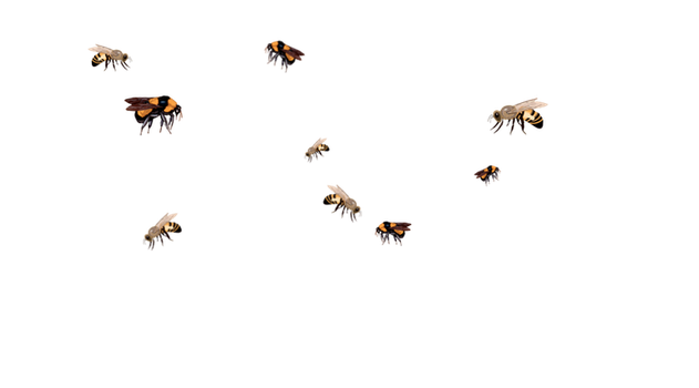 Stock - Flying Bees by Jassy2012