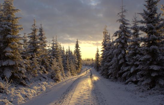 Winter road by lexious