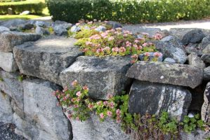 Stock img - Stone wall by Euselia