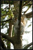Squirrel by scuroluce