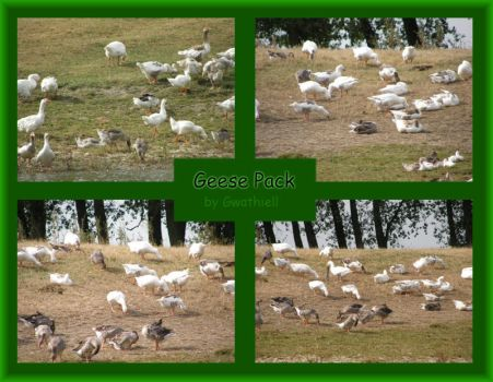 Boat Trip - Geese Pack by Gwathiell