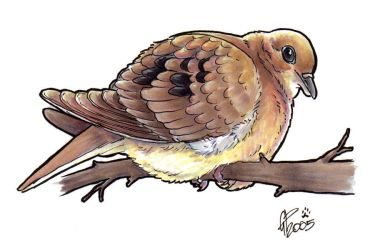 Mourning Dove by twapa