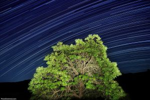 Star Trails Tree by Vlue