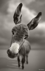 Hey There by BenHeine