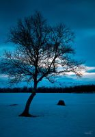 The Dreaming Tree by BoholmPhotography