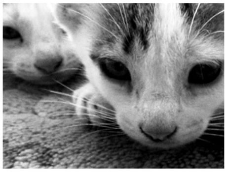 Baby Cats. by mathboy