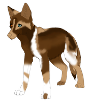 PRICE LOWERED- Ethiopian wolf adopt #1 (Closed) by Flare-goes-OM-adopts