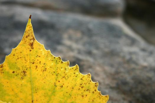 Autumn Leaf top by pricegotphoto