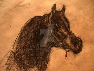 Horse drawing by alegreghi