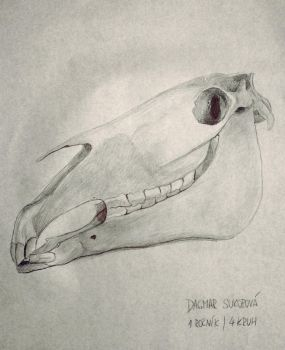 Skull by LUQWE