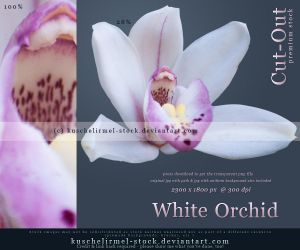 White Orchid Cut Out by kuschelirmel-stock