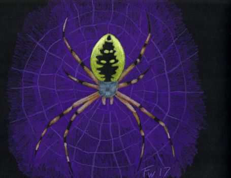 Orb Weaver - colored pencil by Dichotomy-676