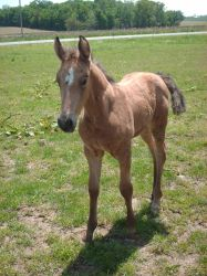 Foal 2 Stock by Lovely-DreamCatcher