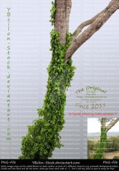 Tree with ivy by YBsilon-Stock by YBsilon-Stock