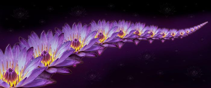 Water Lily by mikpic