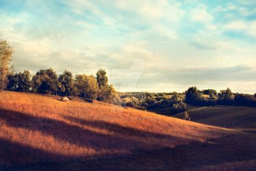 Fields of gold by tiefel