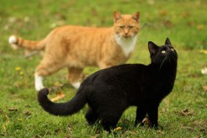 Brother and sister CAT by SaNNaS