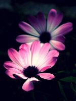 Late bloomer by Susanne01